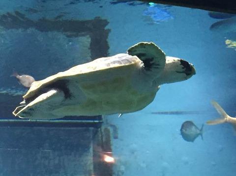 日本の水族館トップ3に入る大阪の海遊館の5つの魅力