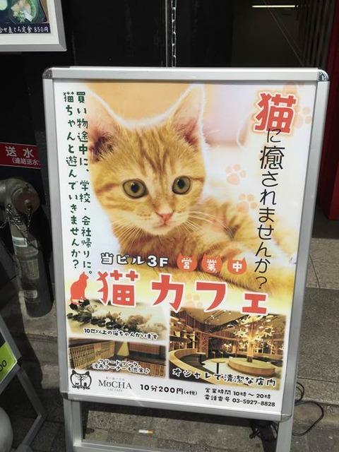 猫カフェ モカ@池袋 2