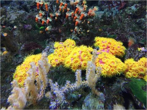 葛西臨海水族園 19