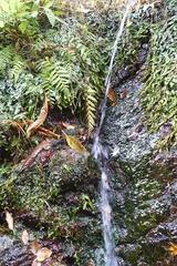 ミニ黒竜の滝