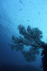 シミランの海