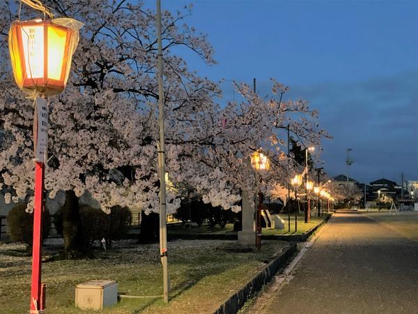 新発田城ライトアップ (1)