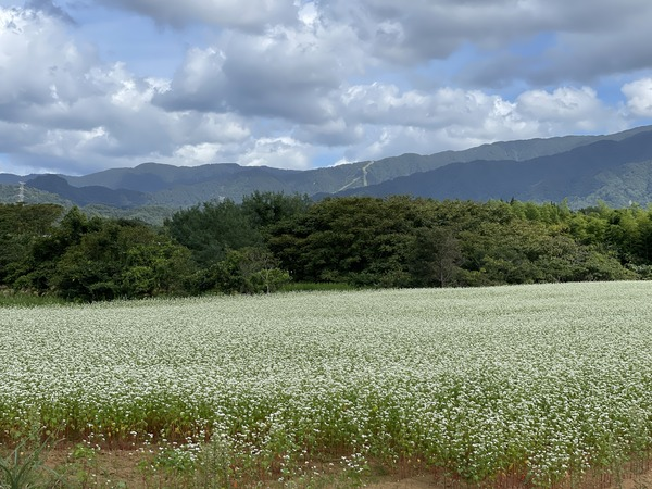 そば畑 (1)