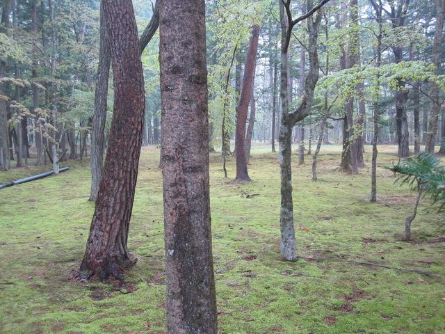 軽井沢の森