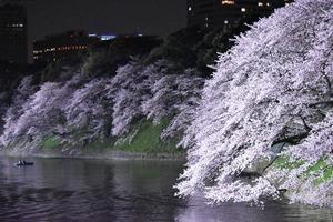 201642 乃木坂~千鳥ヶ淵_5585