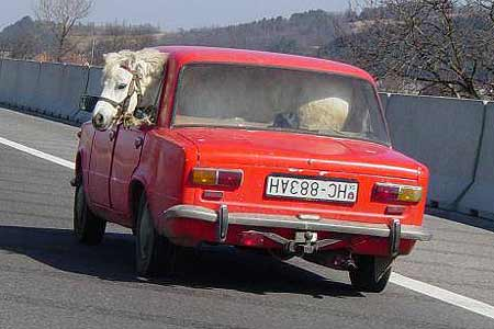 乗車?乗馬?