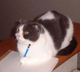 デッサンする猫