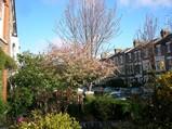london spring1