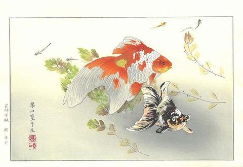楽山 金魚 のコピー