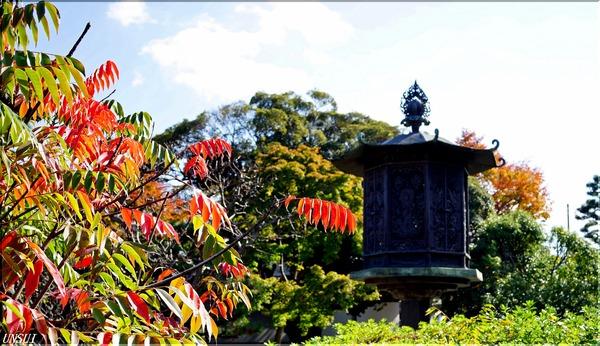 京都国立博物館庭2