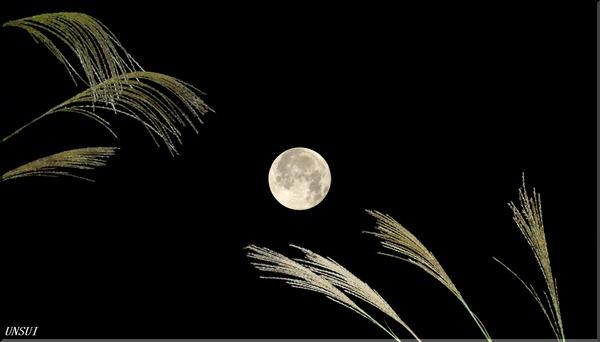 十五夜の月とススキ2000