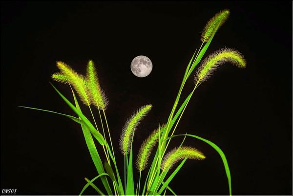 十五夜月とえのころ草