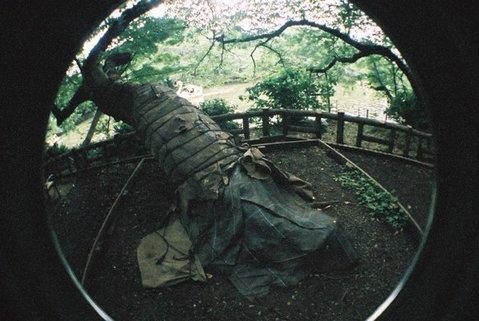 inokashirakoen0802