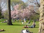 春のセントラル・パーク