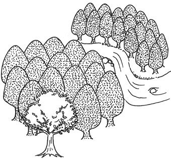 002_木を見て