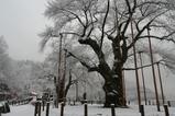 雪の荘川2