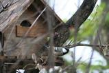 小鳥の家2
