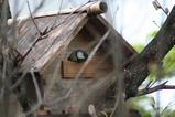 小鳥の家3