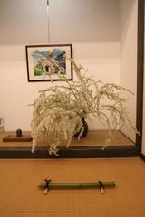 花展の後1