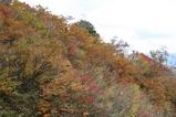 日本の森3