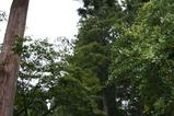 日本の森1