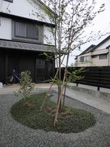 Sさんの庭木