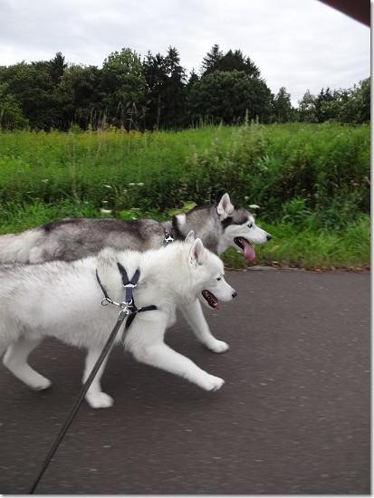 ハナクソ銀坊の出物腫れ物所嫌わず!なんちって。 : 犬たちとJubilations!