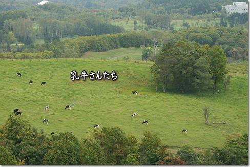 乳牛さんたち