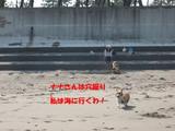 浜辺へ走る宇rん