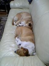 シンクロ睡眠3