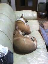 シンクロ睡眠2