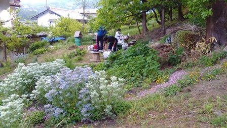 5月のハーブ園