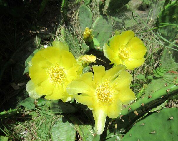0628 サボテンの花