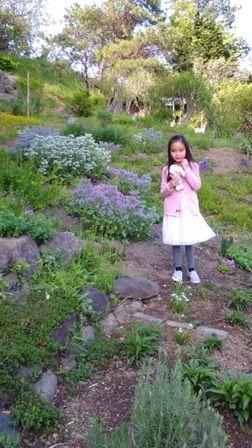 5月のハーブ園3愛華