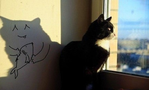 a-cat-shadow-lives
