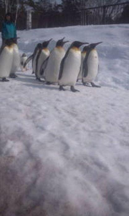 旭川動物園 ペンギン