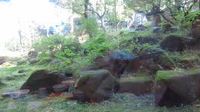 お庭その1