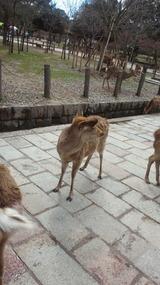 奈良と言えば鹿
