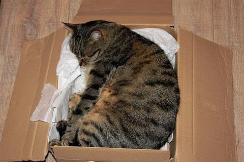 cat-1332688_640