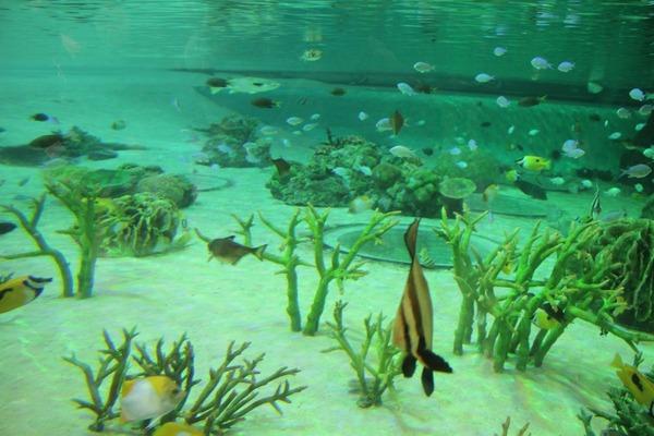 サンゴ礁の浅瀬