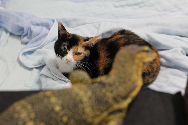 ネコもサルバトールモニターが好きじゃない