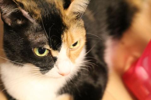 猫、超覚醒