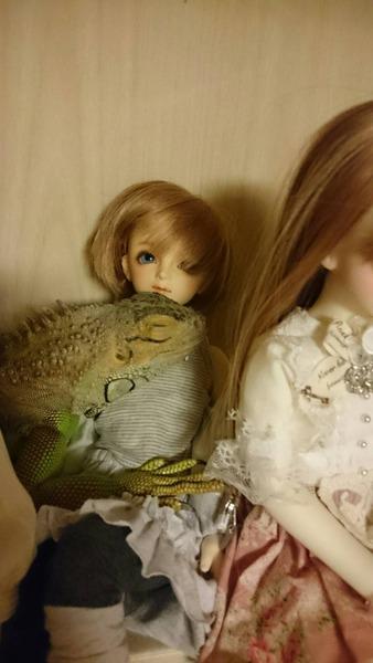 グリーンイグアナとお人形
