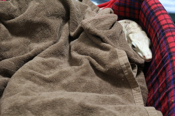 犬用ベッドとサルバトールモニターです2