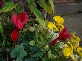 冴える花の色