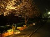 定点撮影090408夜桜
