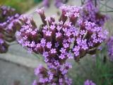 見つけた小さな秋の花