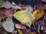 落ち葉秋の色1