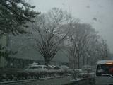 久しぶりに雪
