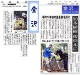 桜の新聞記事